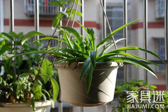 植物去甲醛